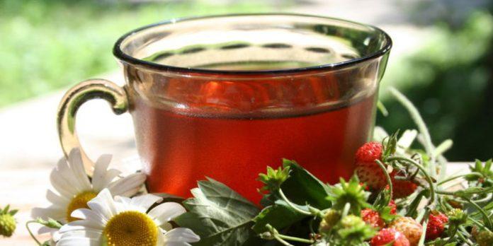 чай из листьев земляники польза как заваривать от чего пьют