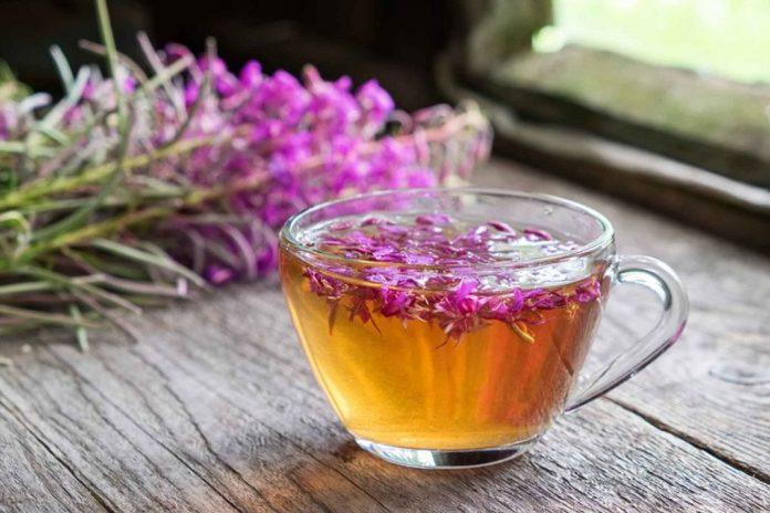 Можно ли пить иван чай при гастрите с повышенной кислотностью