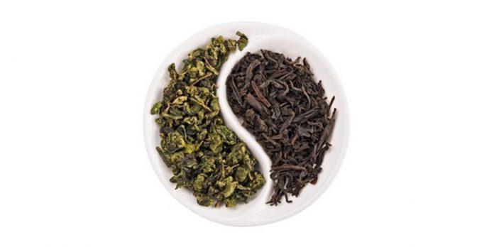 черный и зеленый чай это один и тот же чай