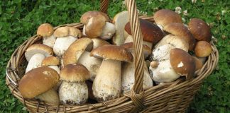Как засолить белые грибы на зиму в банках без уксуса