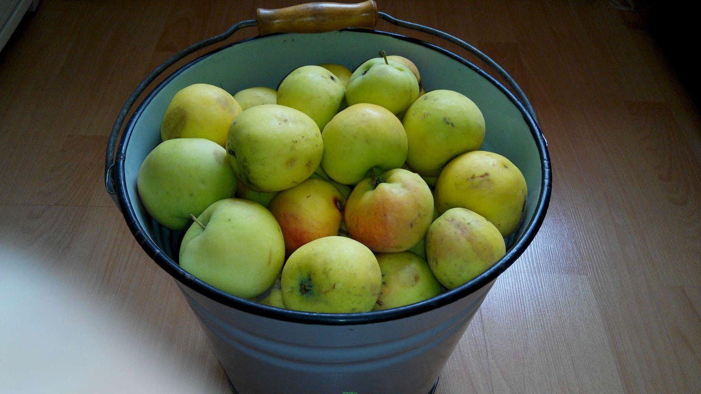Яблоки в ведре